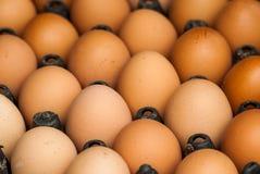 Plan rapproché d'oeufs bruns de poulet Photos libres de droits