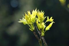 Plan rapproché d'un élevage d'arbre Image libre de droits