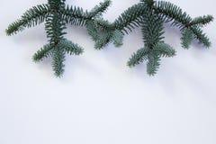 Plan rapproché d'un amour bleu de fleur dans une brume, damascena de Nigella sur les milieux verts Photo stock