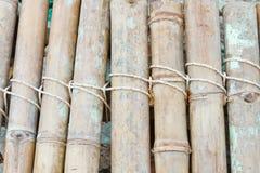 Plan rapproché d'un bambou avec le noeud Image stock