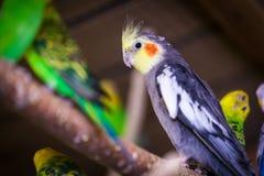 Plan rapproché d'un beau perroquet trois image libre de droits