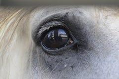 Plan rapproché d'un bel oeil de cheval image stock
