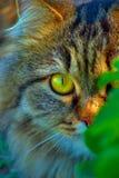 Plan rapproché d'un chat dans l'herbe Photo stock