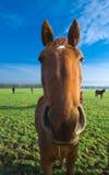 Plan rapproché d'un cheval Photographie stock libre de droits