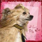 Plan rapproché d'un chien crêté chinois de vue de côté avec le collier de fantaisie Image stock