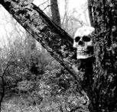 Plan rapproché d'un crâne photographie stock