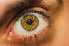 Plan rapproché d'un oeil humain brun Photographie stock