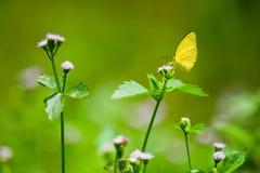 Plan rapproché d'un papillon de monarque Image libre de droits