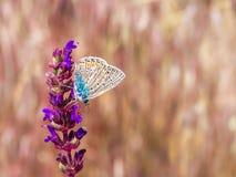 Plan rapproché d'un papillon sur une fleur sur un fond brouillé image libre de droits