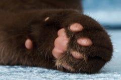 Plan rapproché d'un pied de chat image stock
