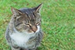 Plan rapproché d'un repos de chat sur l'herbe photo stock