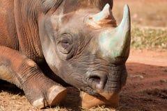 Plan rapproché d'un rhinocéros Photos stock