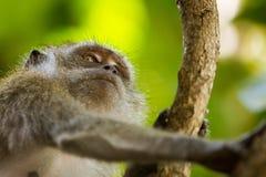 Plan rapproché d'un singe sur un arbre Photographie stock libre de droits