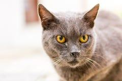 Plan rapproché d'un visage de chat Image libre de droits