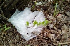Plan rapproché d'une brindille avec les pousses vertes enlacées avec un sachet en plastique blanc images stock