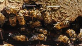 Plan rapproché d'une colonie des abeilles sur un vieux matériel en bois Photo stock