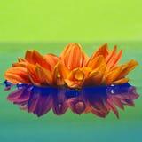 Plan rapproché d'une fleur orange Images libres de droits