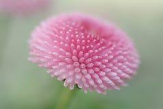 Plan rapproché d'une fleur rose image stock