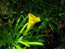 Plan rapproché d'une fleur tropicale Image libre de droits