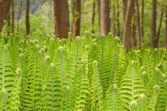 Plan rapproché d'une fougère verte image stock