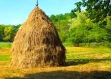 Plan rapproché d'une grande meule de foin simple près de forêt Photographie stock