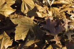Plan rapproché d'une pile des feuilles tombées dans le coucher de soleil image stock