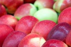Plan rapproché d'une pomme rouge foncé entre d'autres pommes Photo stock