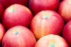 Plan rapproché d'une pomme rouge foncé entre d'autres pommes Images stock