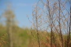 Plan rapproché d'une prairie humide Photographie stock libre de droits