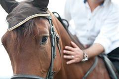 Plan rapproché d'une tête de cheval avec le détail sur l'oeil et sur la main de cavalier. cheval armé étant avance - fermez-vous v Image stock