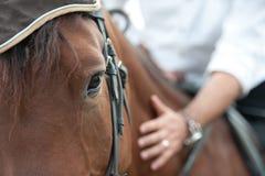 Plan rapproché d'une tête de cheval avec le détail sur l'oeil et sur la main de cavalier. cheval armé étant avance - fermez-vous v Images stock