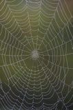 Plan rapproché d'une toile d'araignée rosée-couverte Image libre de droits