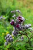 Plan rapproché de belle fleur magenta Images stock