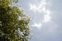 Plan rapproché de belles fleurs blanches image stock