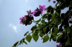 Plan rapproché de belles fleurs roses Photographie stock