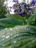 Plan rapproché de belles grandes feuilles tropicales vertes avec le daw de matin sur elles images libres de droits