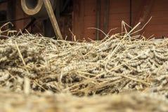 Plan rapproché de blé fauché sur un chariot devant la batteuse historique photographie stock