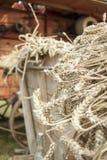 Plan rapproché de blé fauché sur un chariot devant la batteuse historique images stock