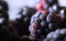 Plan rapproché de Blackberry Photographie stock