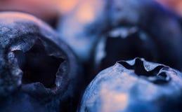 Plan rapproché de Bluebeerries sur le fond chaud Photographie stock libre de droits