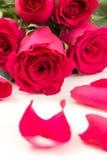 Plan rapproché de bouquet et de pétales de roses rouges, sur le blanc Image libre de droits
