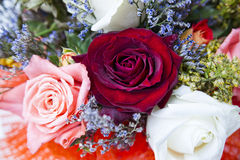 Plan rapproché de boutons de rose Images stock