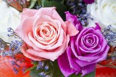 Plan rapproché de boutons de rose Photos stock
