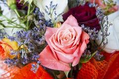 Plan rapproché de boutons de rose Photos libres de droits