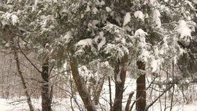 Plan rapproché de branche d'arbre couverte de neige dans la forêt clips vidéos