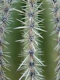 Plan rapproché de cactus Photographie stock libre de droits
