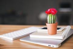 Plan rapproché de cactus Images stock