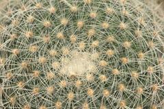 Plan rapproché de cactus Photos stock