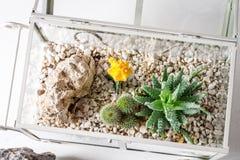 Plan rapproché de cactus dans une mini-serre en verre avec l'écosystème d'individu image libre de droits