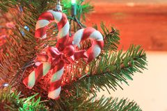 Plan rapproché de cannes de sucrerie sur un arbre de Noël Photographie stock libre de droits